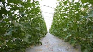 Agricultural lands in kibbutz in Israel. Steadicam shot around
