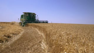 Agriculture and harvesting. Harvester in the field gathering wheat