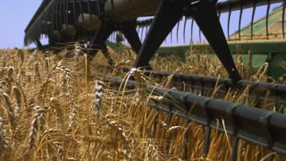 Agro-industry . Harvester combine gathers the grain harvest.Reel, cutter bar closeups in the foreground