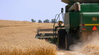 Combine harvester reaps wheat field. Industry agriculture