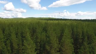 flight over beautiful evergreen forest