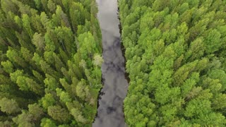 flying over the forest river