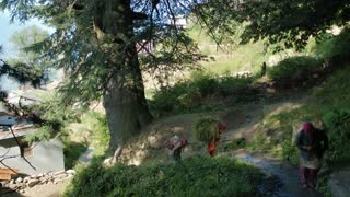 MANALI, INDIA - 24 SEPT 2016: Indian country womans carry huge stacks of hay in vilage