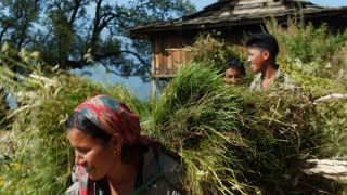 MANALI, INDIA - 24 SEPT 2016: The daily hard work residents of Indian villages. Workers pulling huge bales of hay