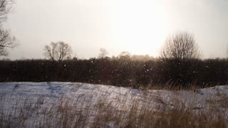 Nature in winter. The snow in the fields. Dry grass in the foreground. Crane shoot