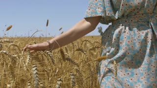 Slow Motion Vintage Dress Female in Wheat Field