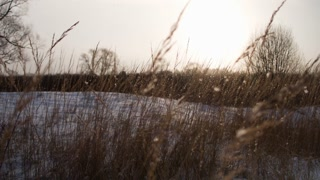 Snow-covered nature. Christmas snowfall in the village.Dry grass in the foreground. Dolly shoot