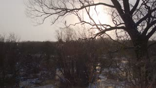 Snow flakes are falling in a field of dry trees.Crane shot of the dry tree in the foreground