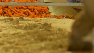 Vegetable industry. Robotic conveyor sorts and washes the carrots. Dirty water in the foreground. Slow motion