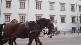 Center of the old city of Vienna, Austria. Horse carts with tourists. Dolly shot
