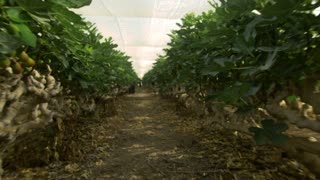 Gardens and greenhouses in the industry of agriculture. Steady shot