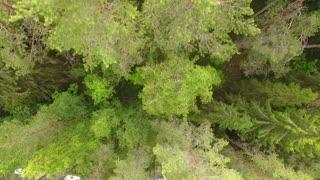 waterfall in deep coniferous forest
