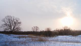 Woods and fields in winter. Snowfall at sunset. Dolly shot