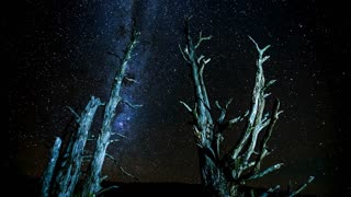 Primal Earth Images Bare Trees Milkyway 4 K Stock