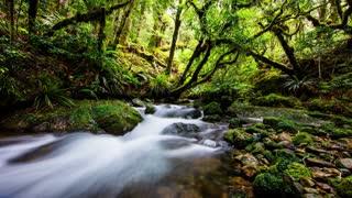 Primal Earth Images Bush Stream 4 K Stock