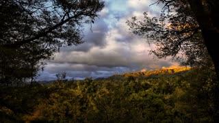 Primal Earth Images Bush Sunset Whirinaki 4 K Stock