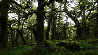 Primal Earth Images Mossy Forest Misty Scene