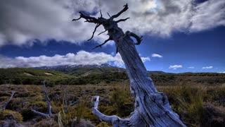 Primal Earth Images Stump Ruapehu Day 4 K Stock
