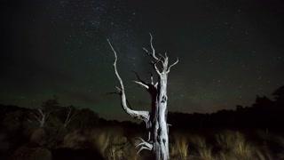 Primal Earth Images Tree Milkyway Windy Night Nz 4 K Stock