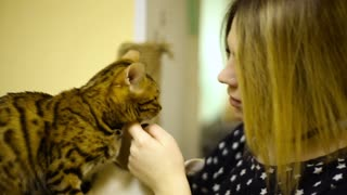 Asian woman girl stroking touches cats