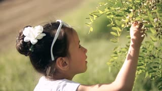 Little girl child brunette latino walks in the forest, garden. Try the acacia flower for taste Close-up