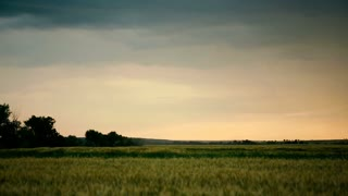 Stormy clouds are gray-blue over the field with grain, wheat. Evening time, sunset, dark. Summer Thunderclouds slide