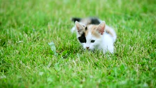 cute three color kitten