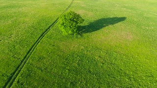 trees in the meadows aerial view
