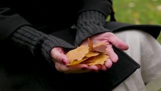 autumn leaves in female hands. finger over the leaves.