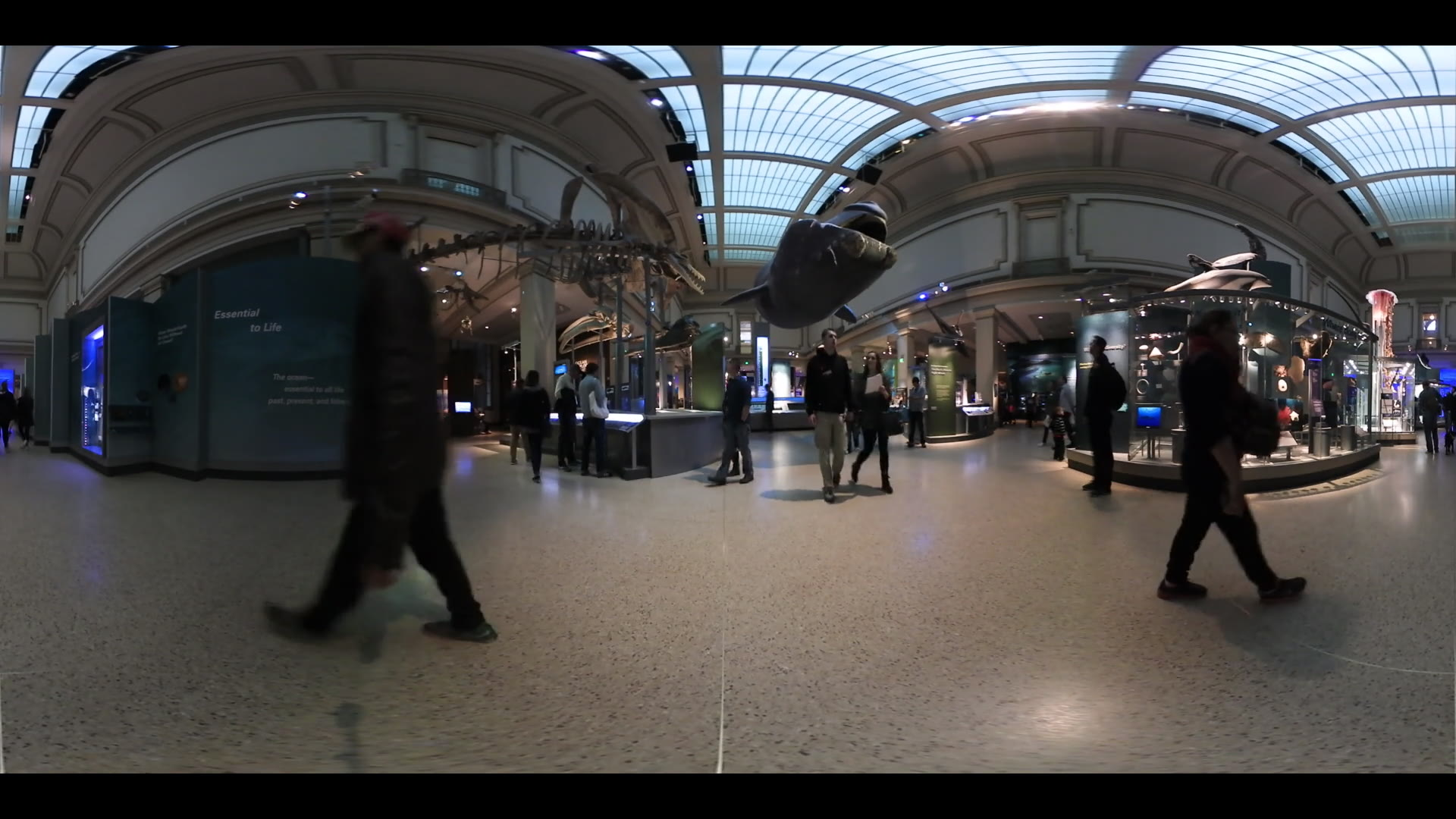 360 VR Video Smithsonian Museum Of Natural History Washington DC. Ocean Origins Hall Exhibit. 2:1 Ratio for Virtual Reality