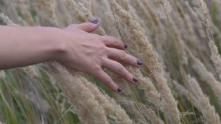 A woman's hand spends through dry high grass and flowers in summer in a field at sunset, slow motion close-up shot.