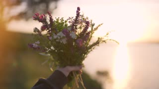 field flowers in woman hand on sunset or sunrise