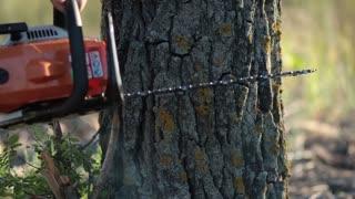 Man with orange chainsaw cutting dry tree