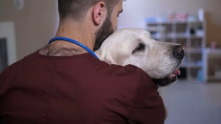 Closeup vet doctor's back hugging gorgeous golder retriever patient at pet care clinic. Young veterinary professional comforting and stroking dog at animal clinic before surgery