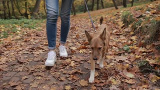 Cute pooch puppy with her owner in autumn park