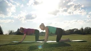 Elegant sporty ladies practicing yoga pose in park