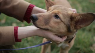Females hands stroking cute puppy outdoors