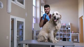 Young male vet holding syringe with needle and making vaccine injection to dog's scruff of neck. Beautiful golden retriever sitting on exam table getting annual vaccination at pet care clinic