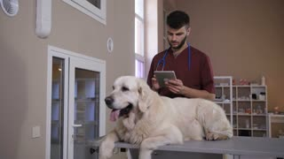 Young vet doctor specialist holding and working on digital tablet pc while his dog patient waiting on exam table at pet care clinic. Veterinary specialist checking test results of golden retriever