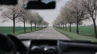 Going by car down the road with blooming trees on its both sides. Rural road