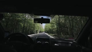 Rear view of a man driving a car along avenue of green trees