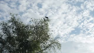 View of a large bird, a stork taking off from a tree. An animal in the wild in Africa.