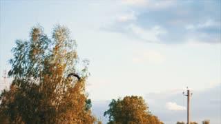 White Stork overhead. A bird flying in the sky.
