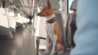 Smart dog sits in train car in front of his owner, looks at camera and then gives a paw for handshake. Travelling with pet