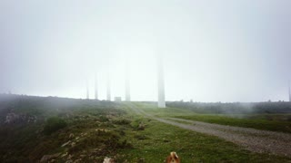 View on unpaved road on top of mountain with many wind tourbine towers hidden in thick fog. Strong wind blows clouds low across and curious basenji dog walks in and out