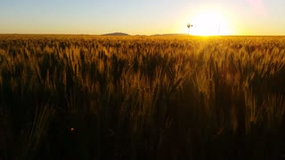 201Wheat field farming sunset landscape with wind mill40727_172127_1.mp4