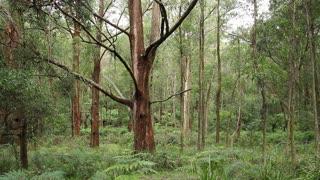 Australian 'Bush' Landscape