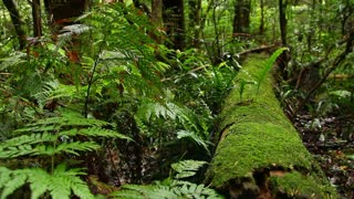 Australian Landscape - Temperate Rainforest NSW