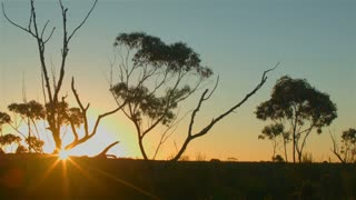 Australian Sunset Landscape Establishing Shot was shot on the Blackmagic cinema camera and provides rich color, this shot could be used for outback, nature, rural scenes.