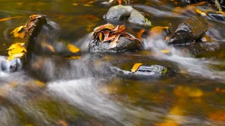Autumn colors flowing fresh water of creek over small waterfall